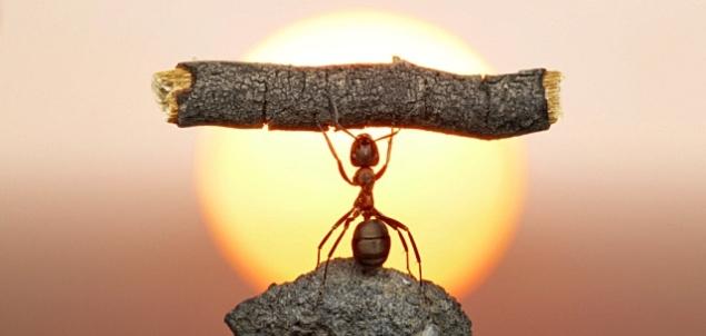 ant-holding-stick